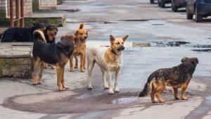 Επιχορήγηση 11.000 ευρώ σε Δήμους της Μαγνησίας για τα αδέσποτα