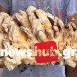 Ηράκλειο: Πιτσιρικάς ανακάλυψε ένα σπάνιο μανιτάρι